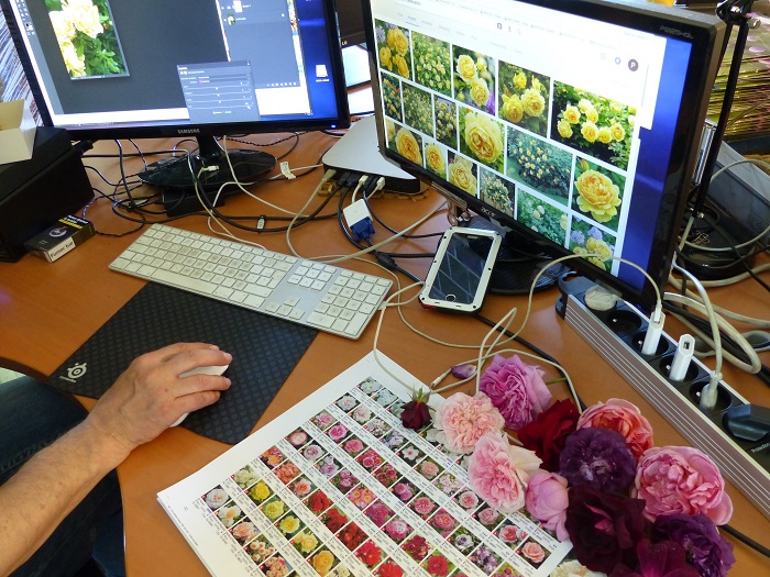 La couleur des fleurs, les pixels et le naturel...