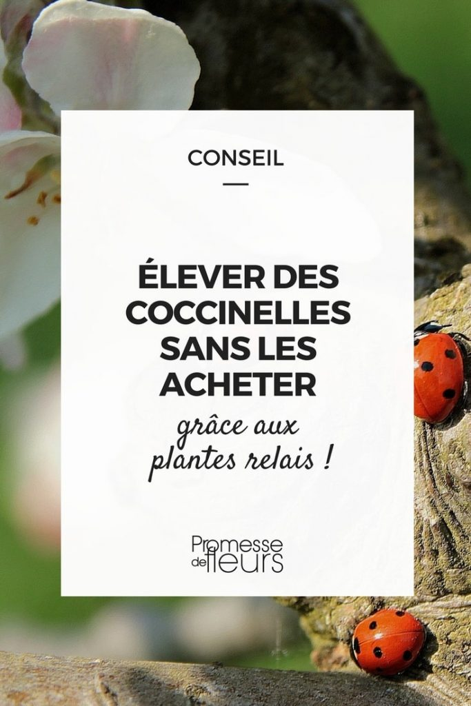 blog jardinage blog plantes vivaces blog potager jardin. Black Bedroom Furniture Sets. Home Design Ideas