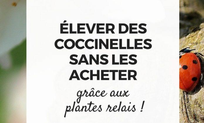 Cochenille identification et traitement blog promesse de fleurs - Acheter des coccinelles ...