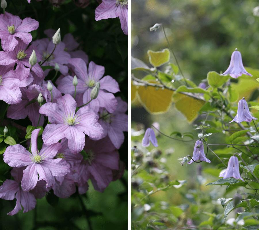Fleurs d\'été : les plus jolies espèces et variétés de mon ...