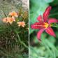Fleurs d'été : les plus jolies espèces et variétés de mon jardin !
