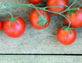 Tomate : mildiou, autres maladies et ravageurs