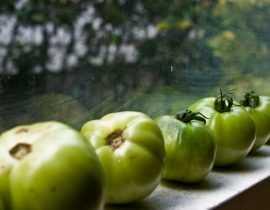 Que faire des tomates vertes ?