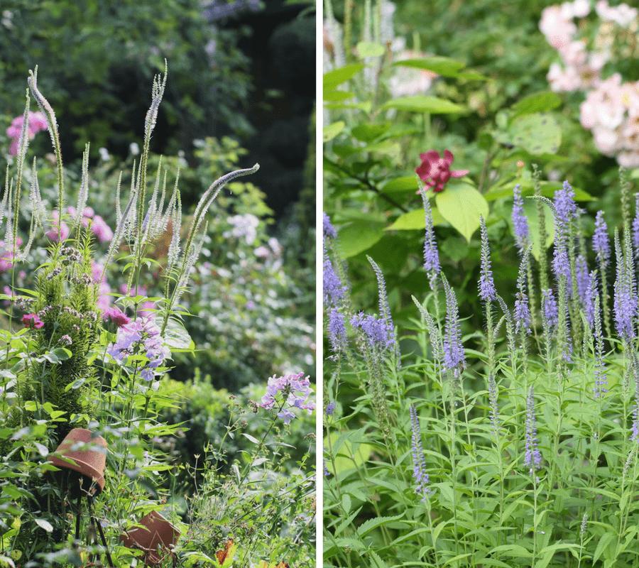 veroniques et fleurs d'été