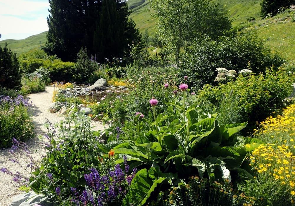 Le jardin botanique alpin du lautaret blog promesse de for Pro du jardin