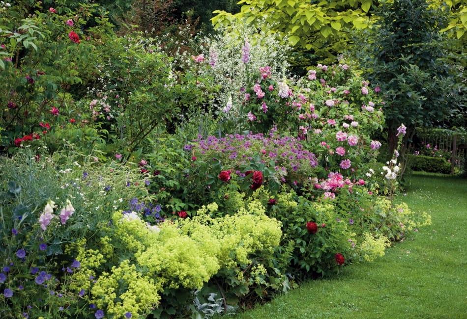 Associer les géraniums vivaces - Promesse de Fleurs