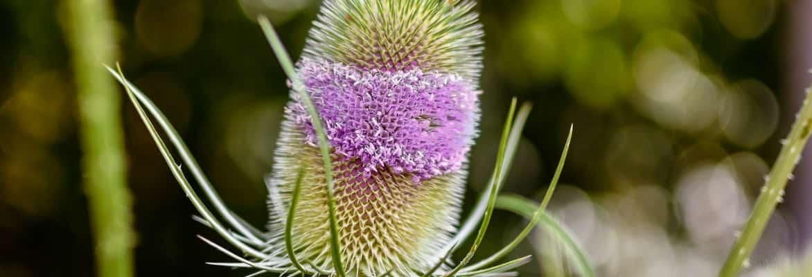 Plantes bisannuelles blog promesse de fleurs for Promesse de fleurs