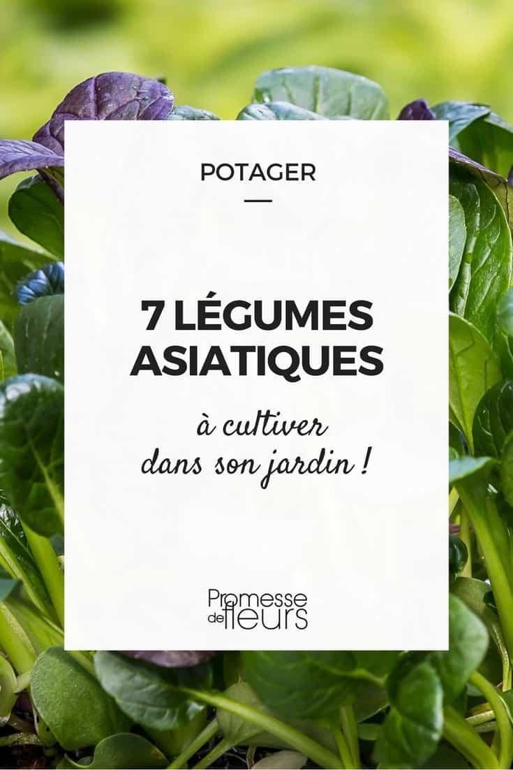 7 légumes asiatiques à cultiver au potager