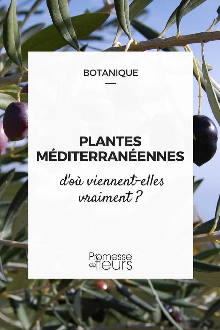 Plantes méditerranéennes : d'où viennent-elles vraiment ?