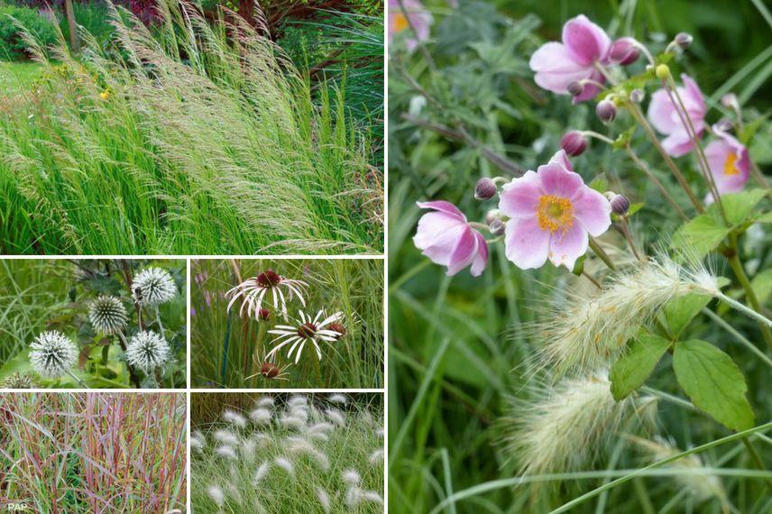 Associer anemone japonica et graminées