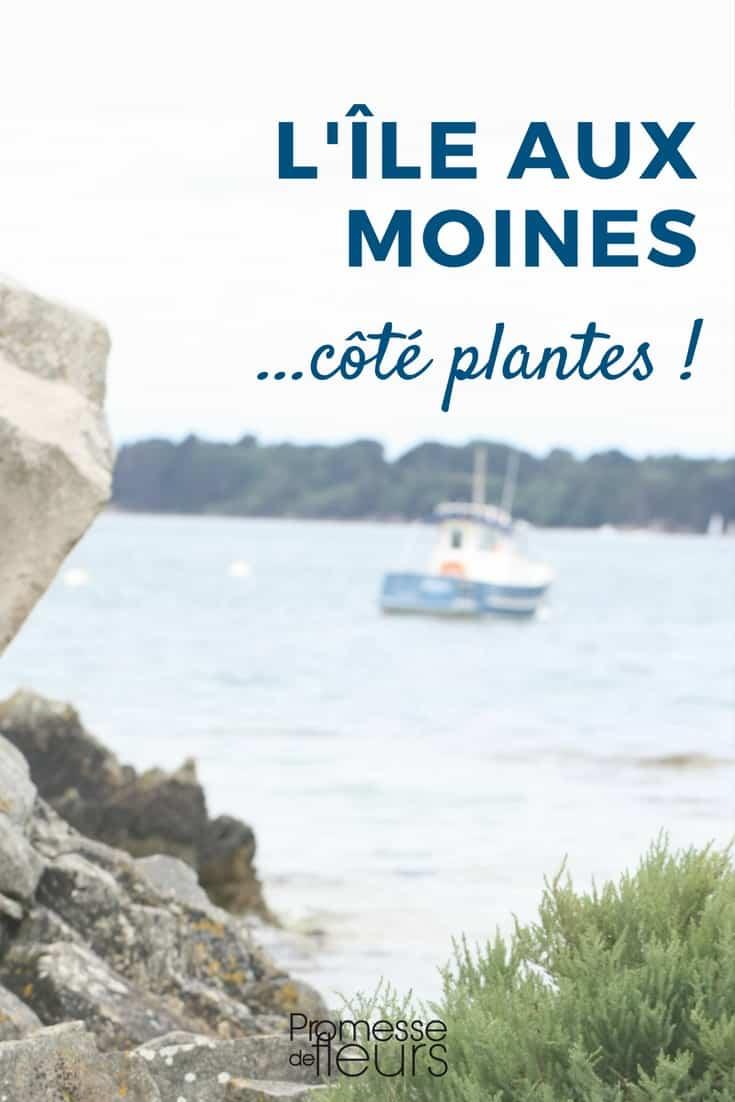 L'île aux Moines... côté plantes !