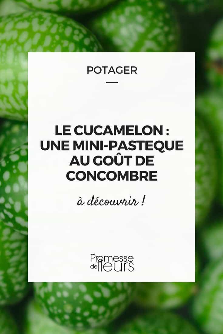 Le Cucamelon : une mini pastèque au goût de concombre