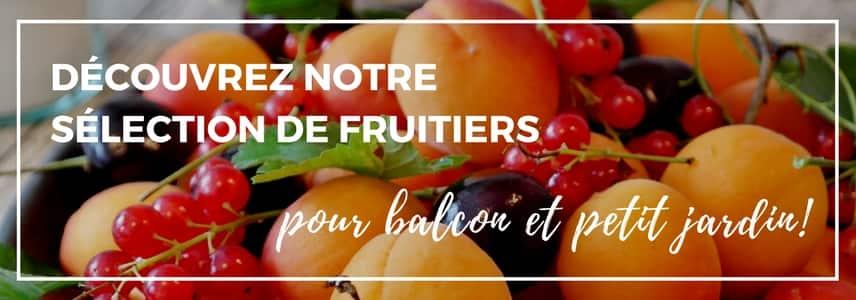 fruitiers pour balcon et petit jardin - vendus en ligne