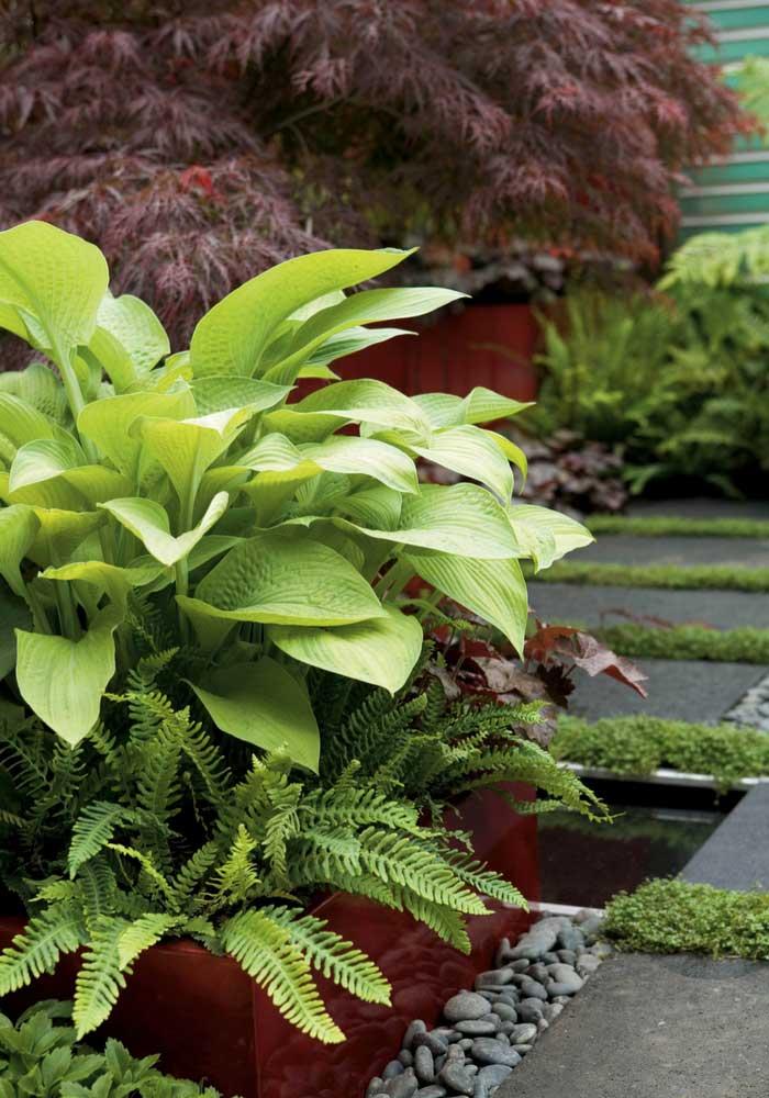 rable du japon comment l 39 associer au jardin conseils promesse de fleurs. Black Bedroom Furniture Sets. Home Design Ideas