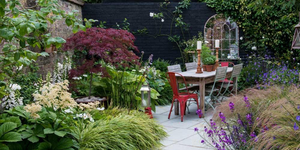 Rable du japon comment l 39 associer au jardin conseils - Comment se debarrasser du liseron au jardin ...