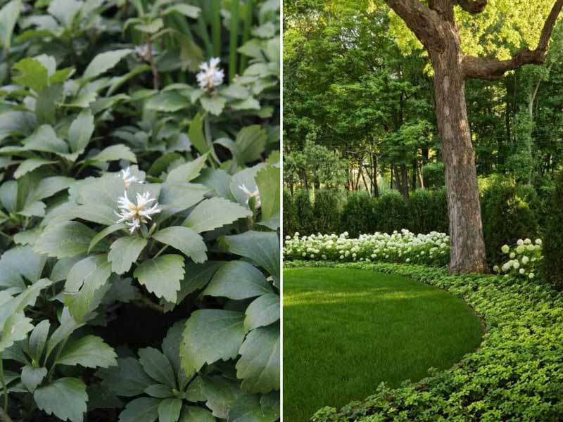 Plante sol calcaire stunning plante couvre sol terrain - Plante couvre sol sans entretien ...