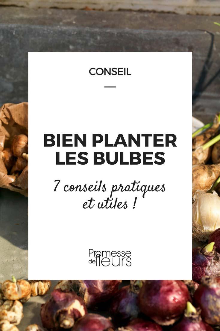 Planter des bulbes? 7 conseils pratiques et utiles !