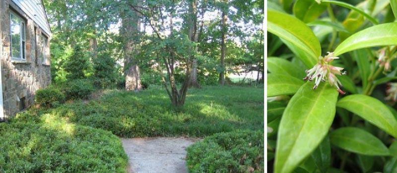 10 couvre sols persistants qu 39 il faut avoir dans son jardin blog promesse de fleurs. Black Bedroom Furniture Sets. Home Design Ideas