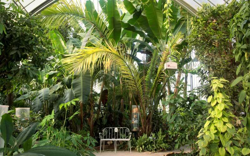 a lintrieur de lune des trois serres du jardin botanique de genve - Jardin Botanique Geneve