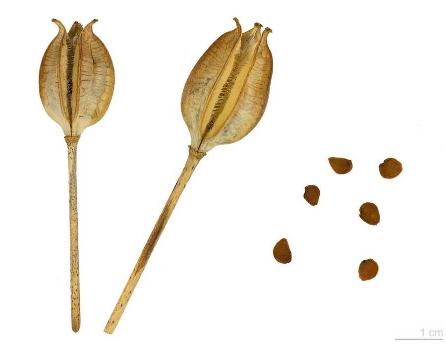 Tulipes : Comment les planter, les cultiver et les entretenir