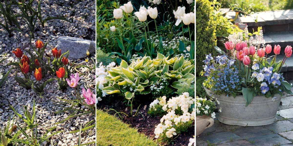 tulipes comment les planter les cultiver et les entretenir promesse de fleurs. Black Bedroom Furniture Sets. Home Design Ideas