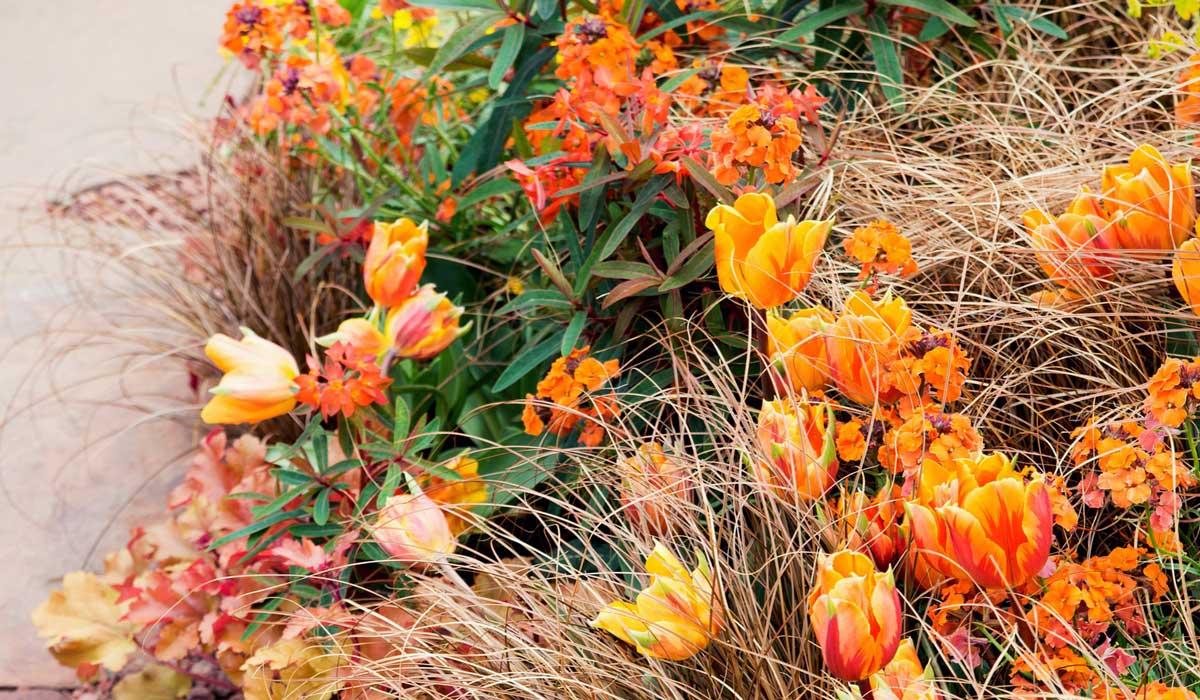 Doit On Deterrer Les Oignons De Tulipes tulipes : comment les planter, les cultiver et les entretenir ?
