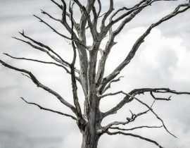 Que faire d'un arbre mort ?