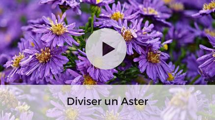 Diviser un Aster