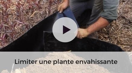 Limiter une plante envahissante - video jardinage