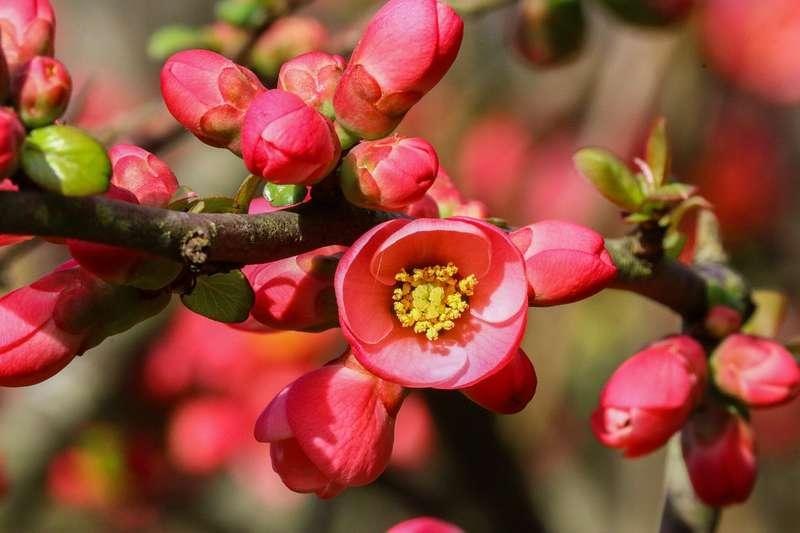 Les meilleures plantes mellif res par saison promesse de for Pianta mediterranea con fiori rossi bianchi e gialli