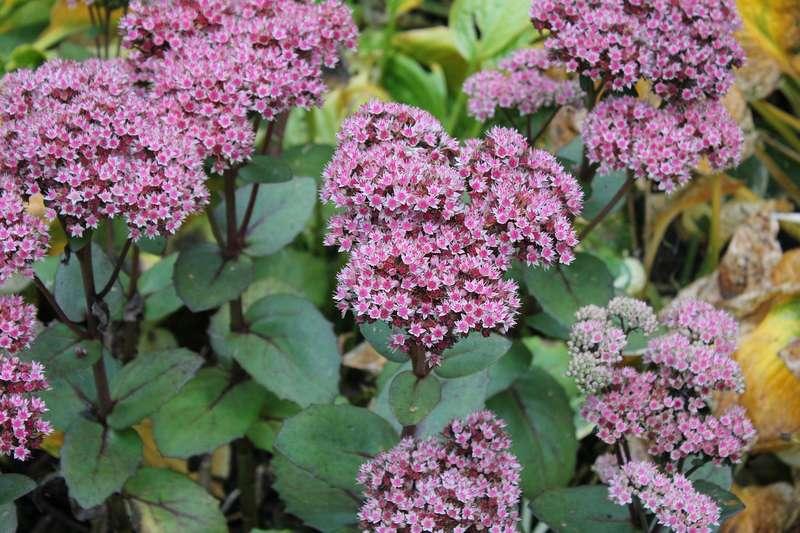Les meilleures plantes mellif res par saison promesse de fleurs - Plante qui attire les moustiques ...