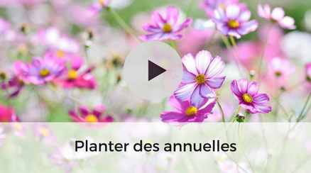 Planter des plantes annuelles