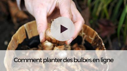 Comment planter vos bulbes à fleurs en ligne