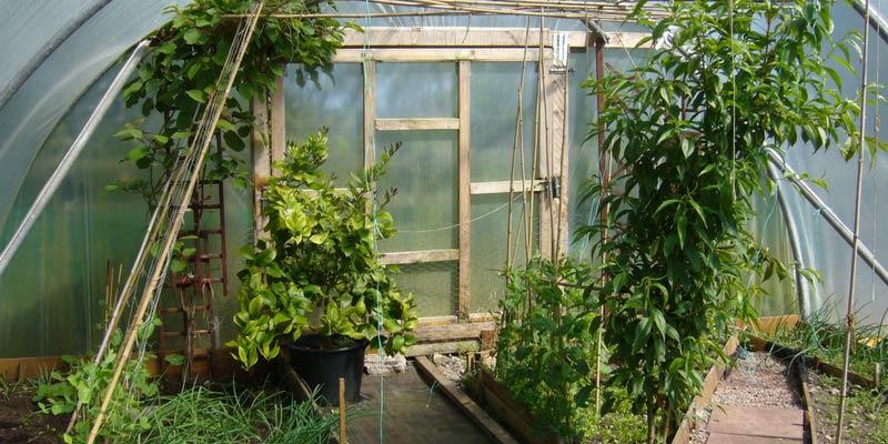 une serre de jardin au potager tout ce qu 39 on peut y faire blog promesse de fleurs. Black Bedroom Furniture Sets. Home Design Ideas