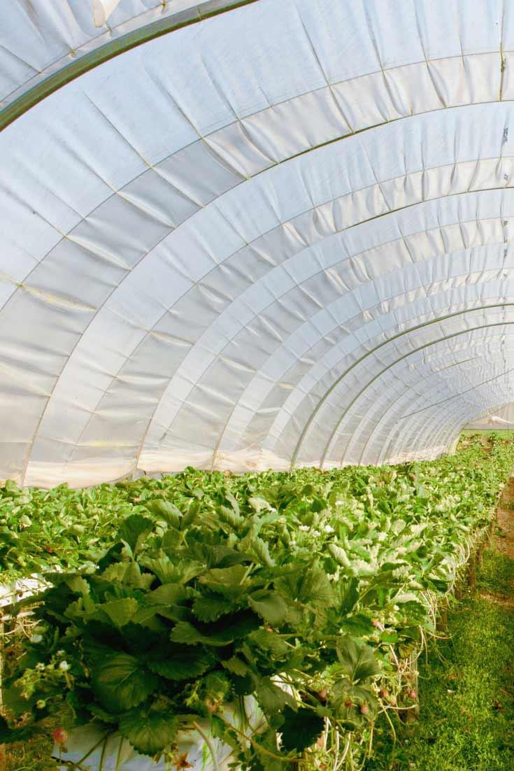 Que Planter En Octobre Sous Serre une serre de jardin au potager ? tout ce qu'on peut y faire