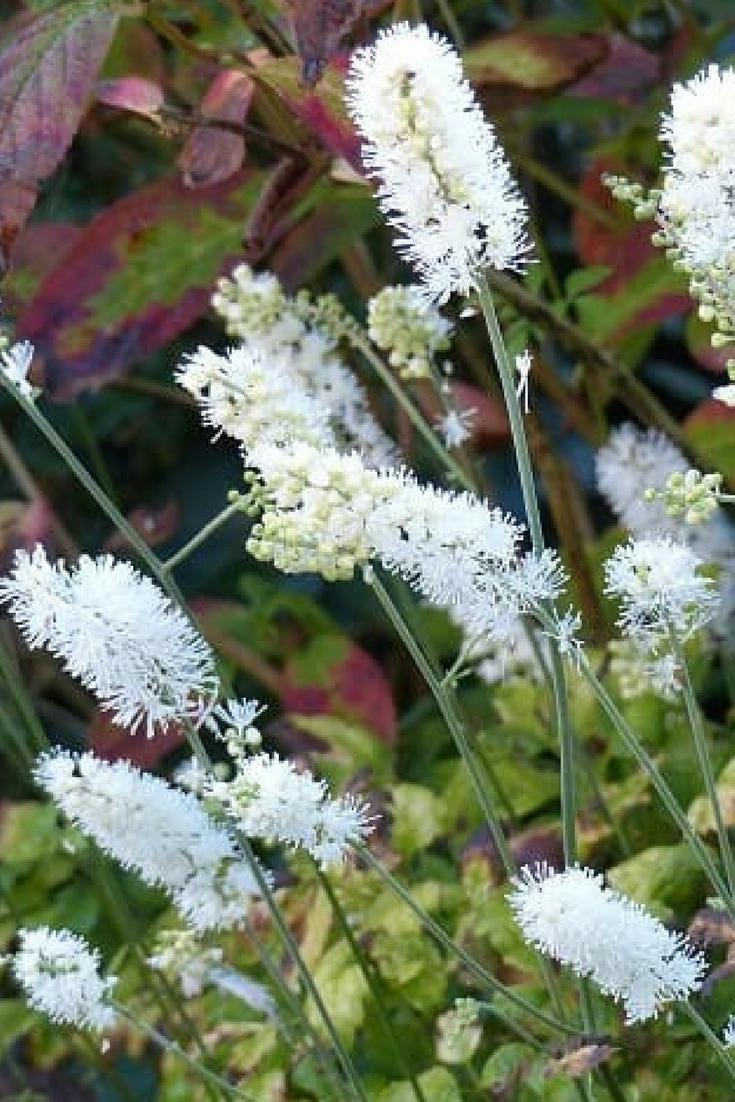5 vivaces à floraison tardive qu'il faut avoir dans son jardin