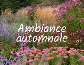 Ambiance automnale
