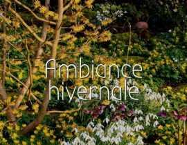 Ambiance Hivernale au jardin