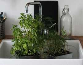 Plantes en pot et arrosage : gérer les grosses chaleurs pendant votre absence