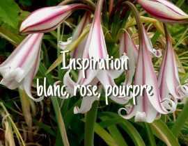Inspiration Blanc, Rose, Pourpre