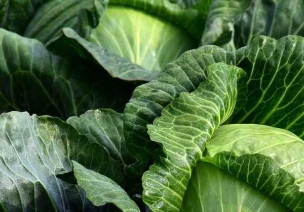 7 légumes à semer en fin d'été au potager