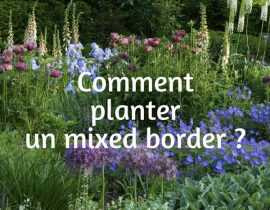 Comment planter un Mixed border ?