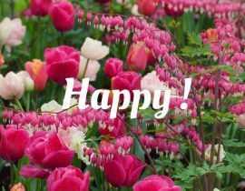 Jardin tendance Happy