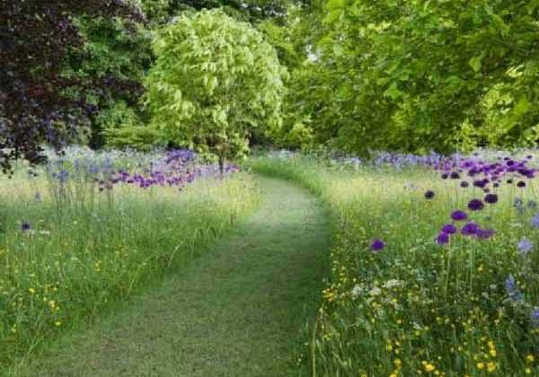 Planter et cultiver les plantes australes nos conseils for Plante jardin sans entretien