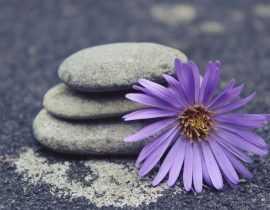 Le jardinage : une thérapie anti-stress efficace