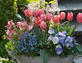 Jardinières de printemps : composez-les en septembre... remerciez-nous en mars !