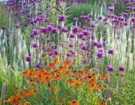 Massif de fleurs : variez et mixez les formes !