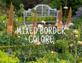 Mixed Border coloré