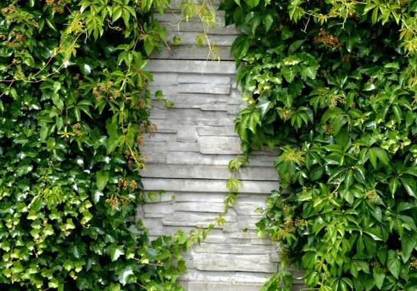 Un mur au jardin : nos idées pour l'habiller