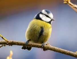 Nourrir les oiseaux du jardin en hiver